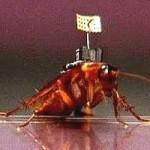 Высокотехнологичные тараканы принесут обществу большую пользу