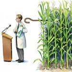 Исследования о вреде ГМО признаны ненаучными