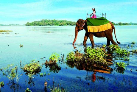 Развлечения на Шри-Ланке